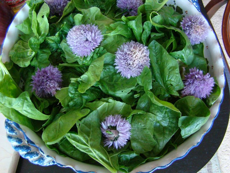 Salad greens, fresh spinach, chive flowers