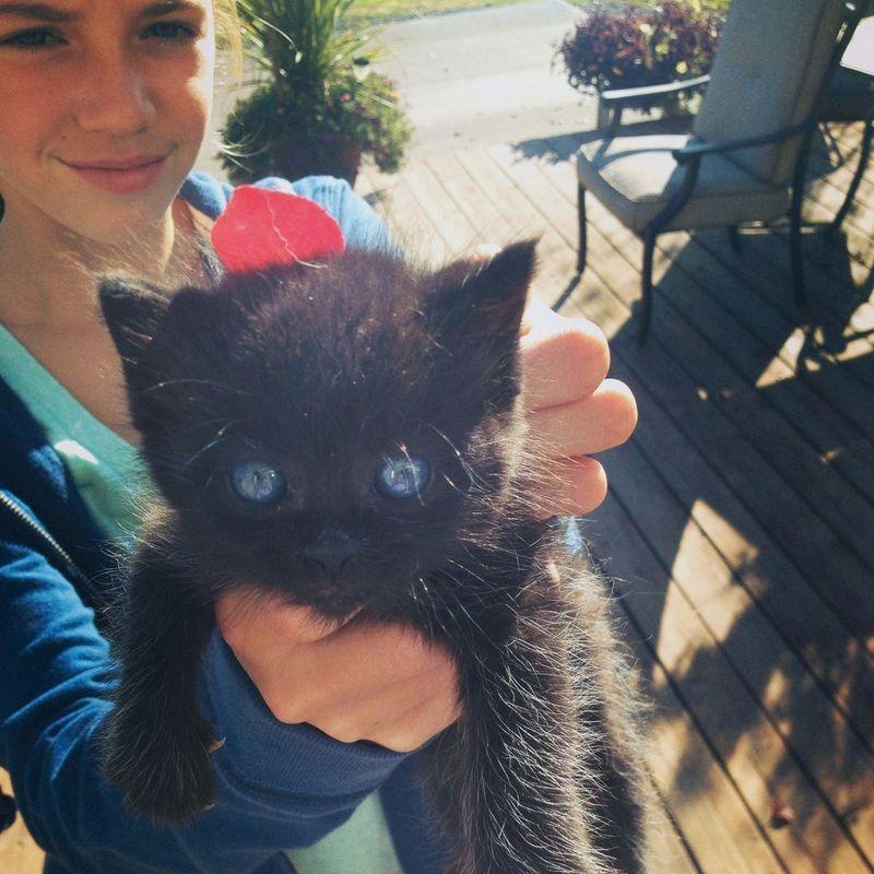 kitten rescue whatmattersmostnow.typepad.com