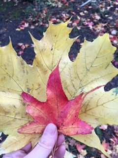 Fall leaves whatmattersmost.typepad.com