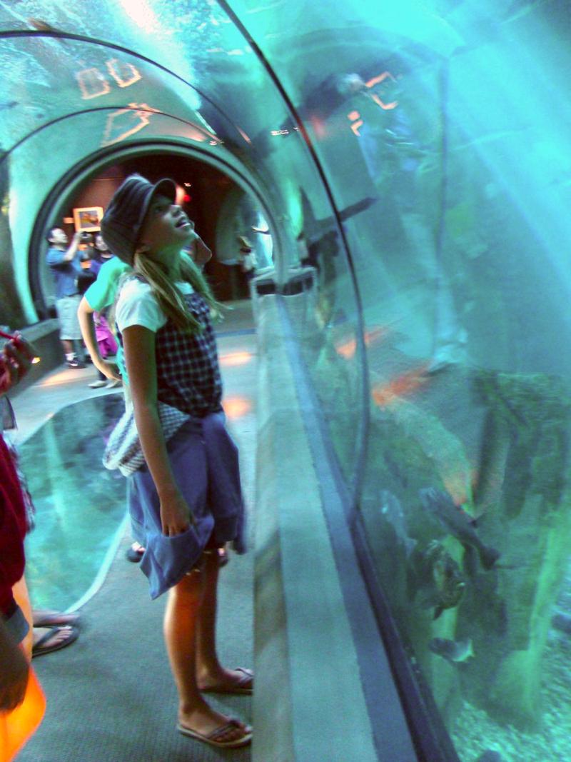 newport aquarium whatmattersmostnow.typepad.com